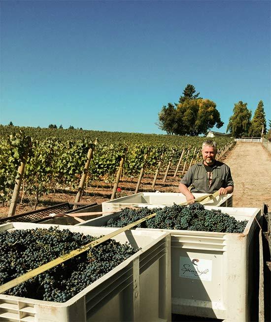 Matt Compton in Bovine Vineyard